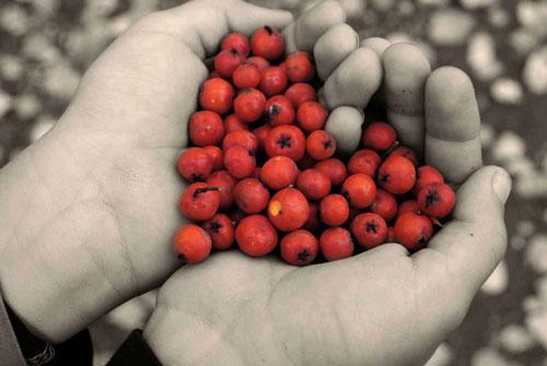 خواص زالزالک - فواید مفید زالزالک - پرخاصیت ترین میوه ها